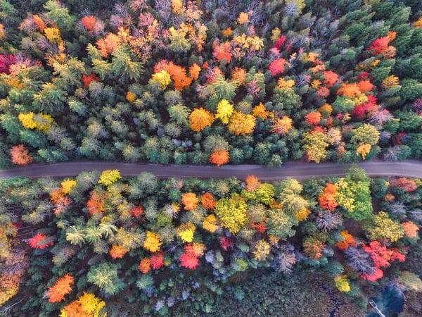trees-2602588_1920